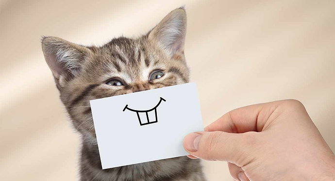 do-cats-smile-header