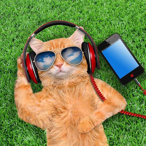 cat-headphones-wearing-sunglasses-relaxing-grass-67337294