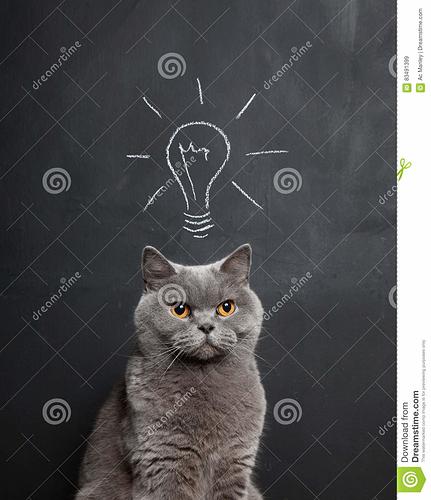 cat-bright-idea-chalk-drawing-light-bulb-above-grey-83491399