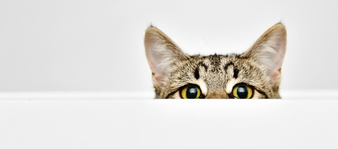 cat-peeking-over-white-wall-with-only-eyes-and-ears-visible-3-760x335