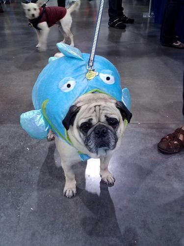 Bodhi - Fish Costume at Dog Fair
