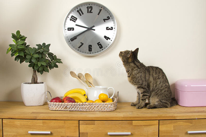 domestic-cat-looking-up-to-wall-clock-watching-time-94374250