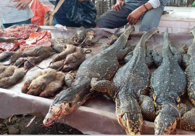 rats-and-lizards-for-sale