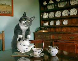 Cat serving tea