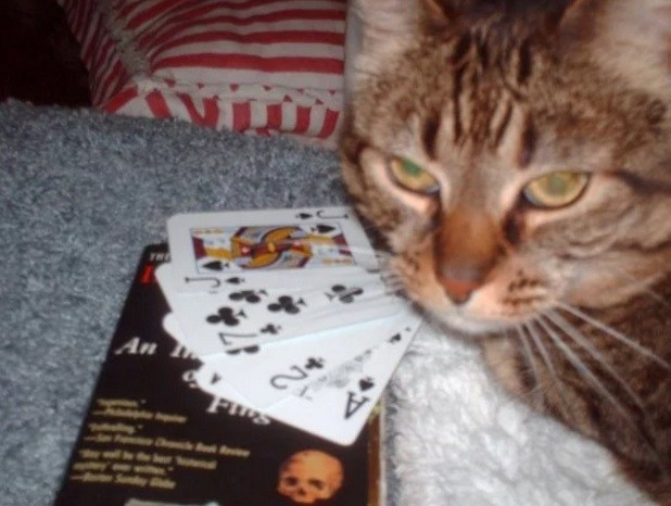 Top-10-Funny-Images-of-Casino-Cats-4