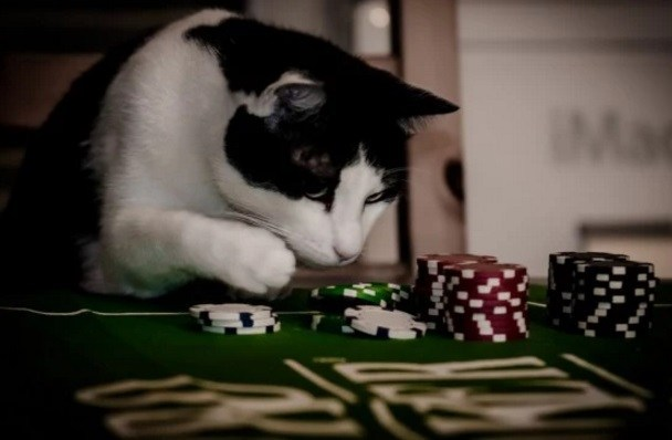 Top-10-Funny-Images-of-Casino-Cats-8