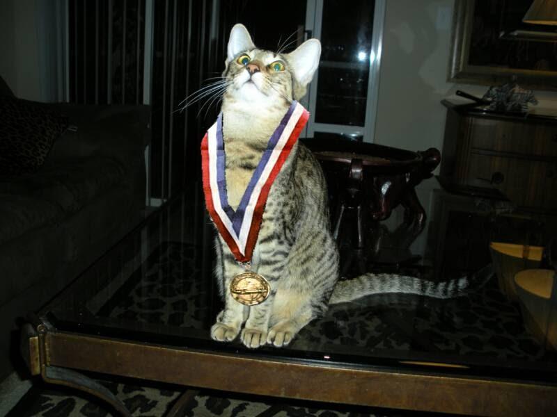 gold medal cat