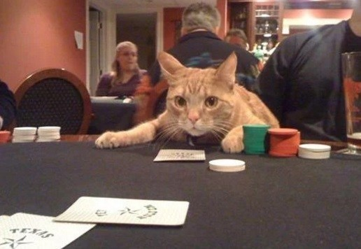 Top-10-Funny-Images-of-Casino-Cats-7